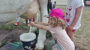 Bunnies odwiedzają Farmę